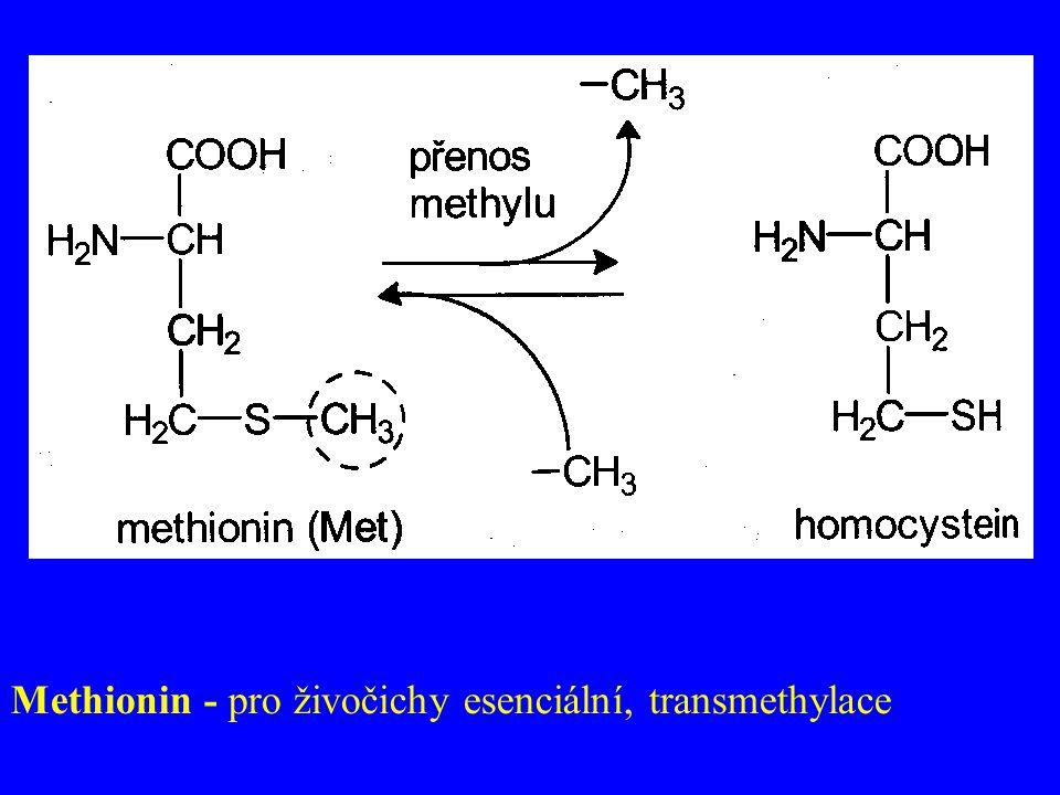 Methionin - pro živočichy esenciální, transmethylace