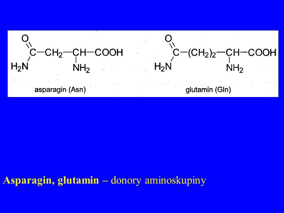Asparagin, glutamin – donory aminoskupiny