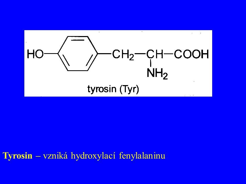 Tyrosin – vzniká hydroxylací fenylalaninu