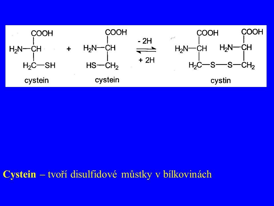 Cystein – tvoří disulfidové můstky v bílkovinách