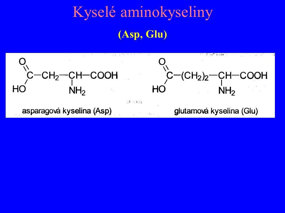 Kyselé aminokyseliny (Asp, Glu)