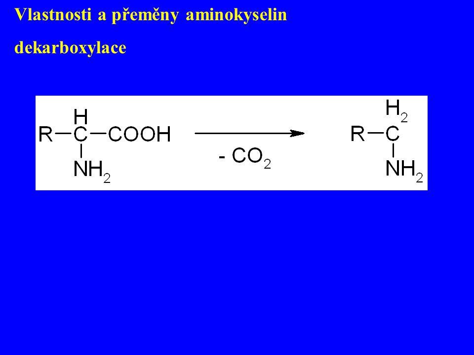 Vlastnosti a přeměny aminokyselin dekarboxylace