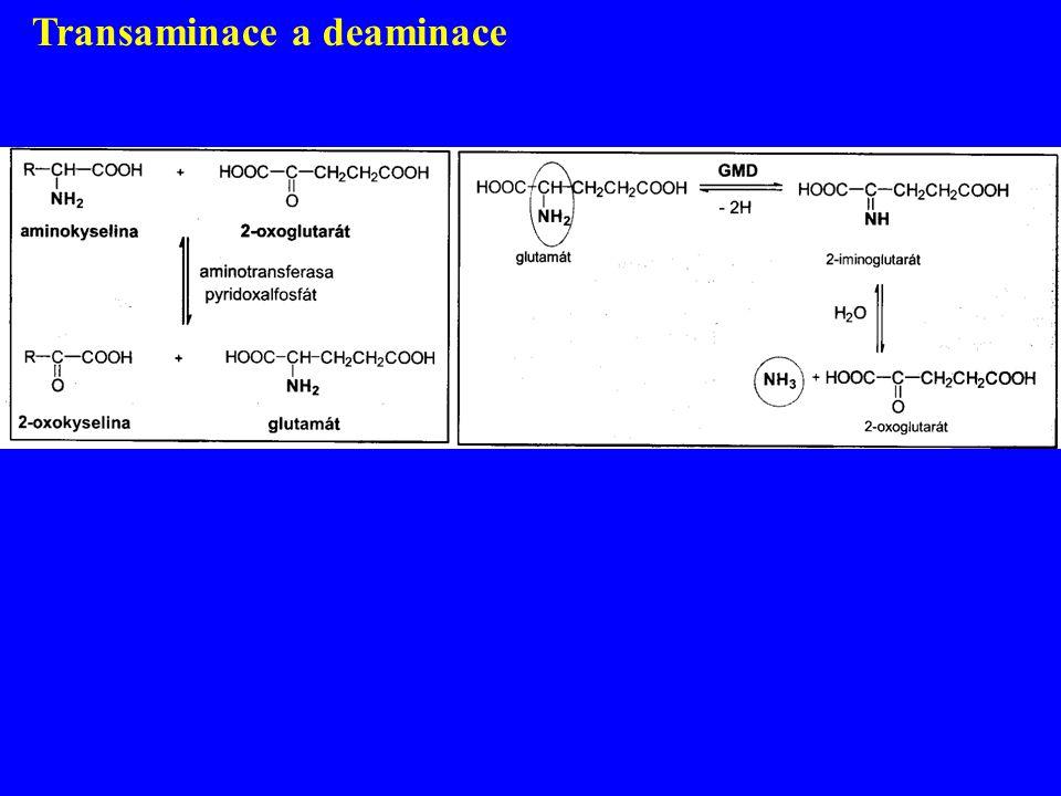 Transaminace a deaminace