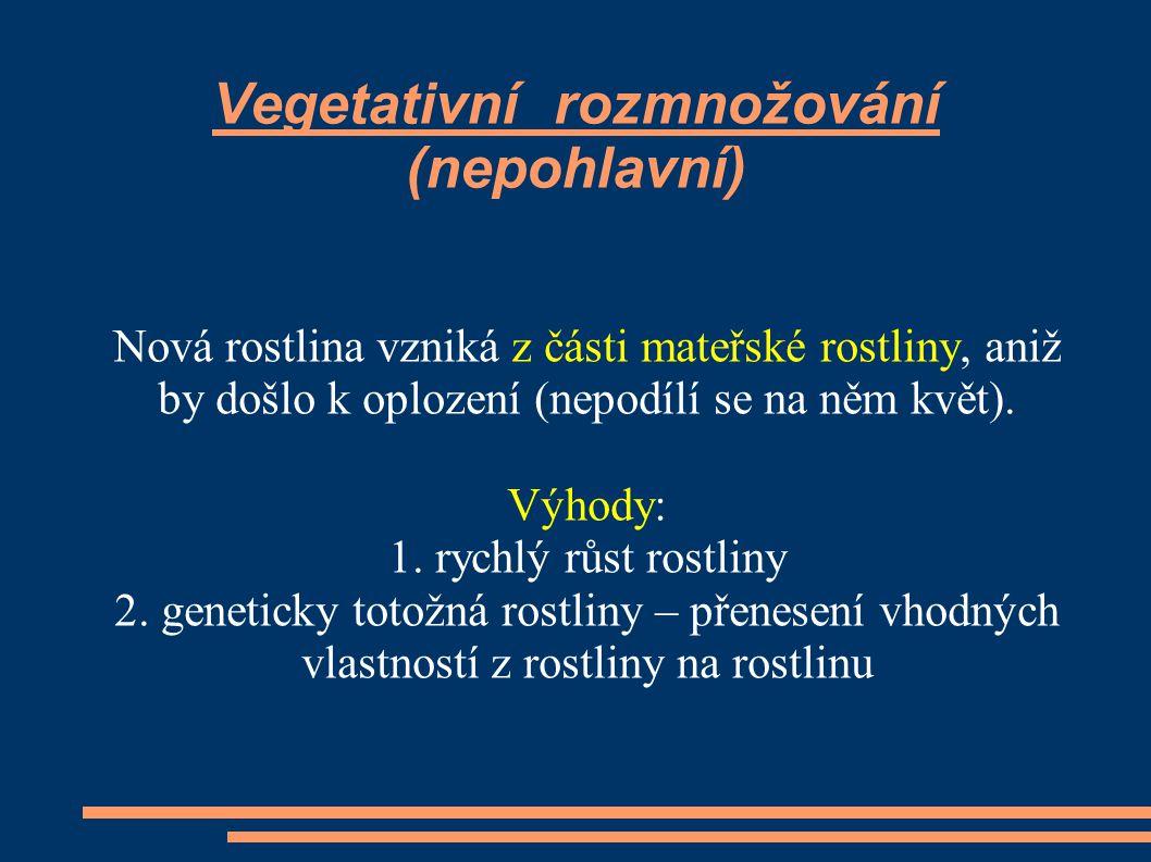 Vegetativní rozmnožování (nepohlavní) Nová rostlina vzniká z části mateřské rostliny, aniž by došlo k oplození (nepodílí se na něm květ).