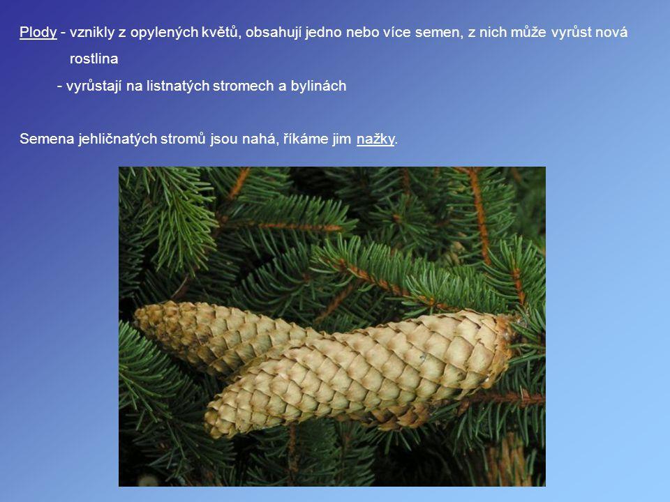 Plody - vznikly z opylených květů, obsahují jedno nebo více semen, z nich může vyrůst nová rostlina - vyrůstají na listnatých stromech a bylinách Seme
