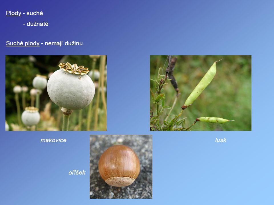 Plody - suché - dužnaté Suché plody - nemají dužinu makovice oříšek lusk