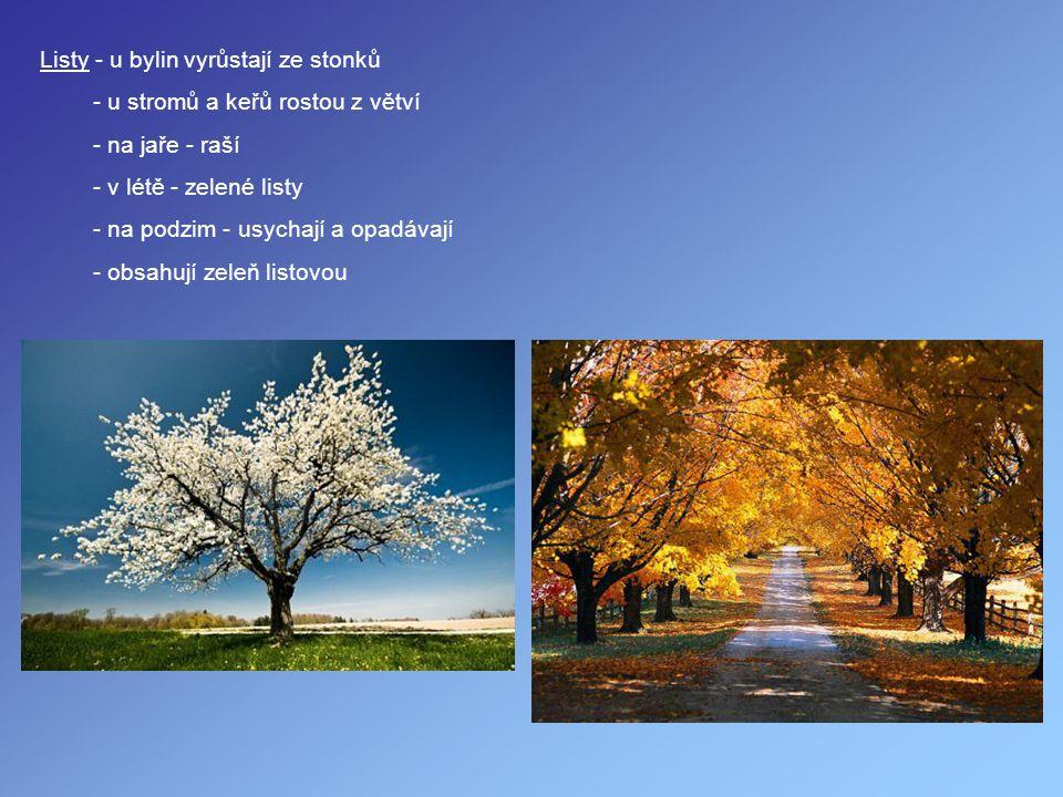 Listy - u bylin vyrůstají ze stonků - u stromů a keřů rostou z větví - na jaře - raší - v létě - zelené listy - na podzim - usychají a opadávají - obs