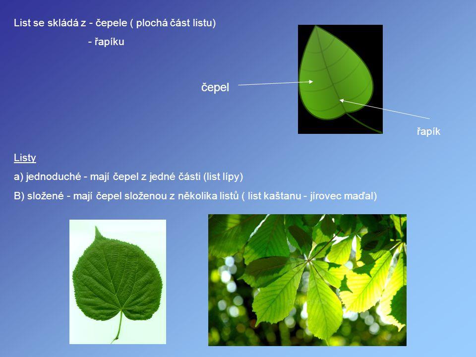 List se skládá z - čepele ( plochá část listu) - řapíku čepel řapík Listy a) jednoduché - mají čepel z jedné části (list lípy) B) složené - mají čepel