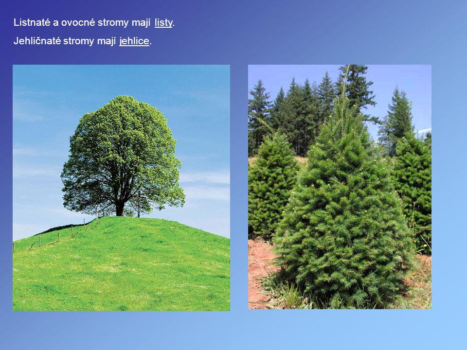 Listnaté a ovocné stromy mají listy. Jehličnaté stromy mají jehlice.