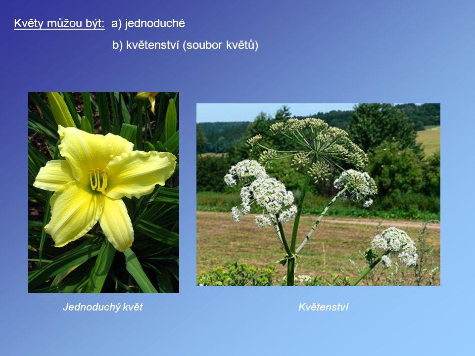 Květy můžou být: a) jednoduché b) květenství (soubor květů) Jednoduchý květKvětenství