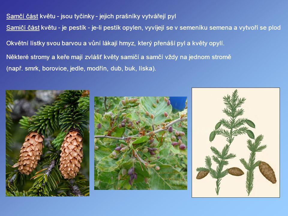 Samčí část květu - jsou tyčinky - jejich prašníky vytvářejí pyl Samičí část květu - je pestík - je-li pestík opylen, vyvíjejí se v semeníku semena a v