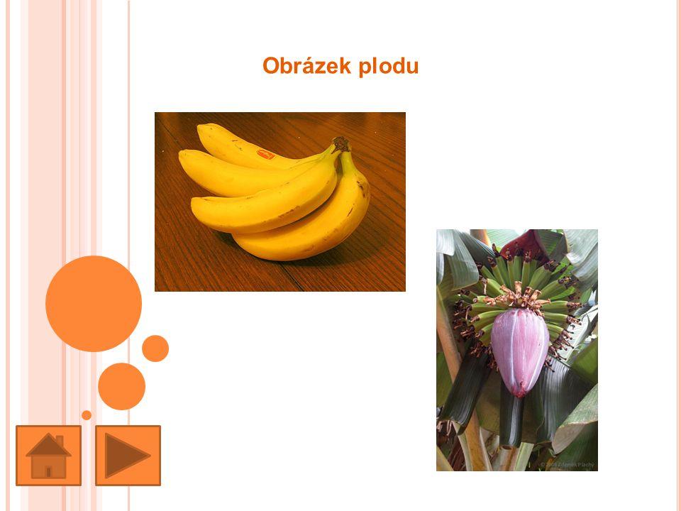 Země původu Banánovníky pocházejí z jihovýchodní Asie, odkud se rozšířily do různých tropických oblastí celého světa.