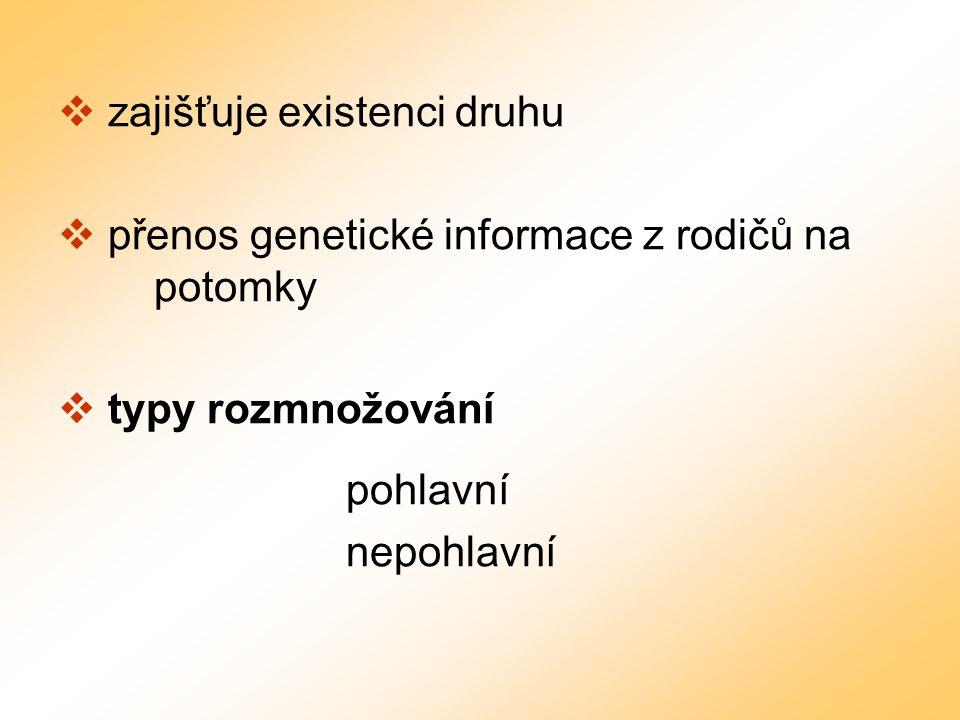 zajišťuje existenci druhu  přenos genetické informace z rodičů na potomky  typy rozmnožování pohlavní nepohlavní