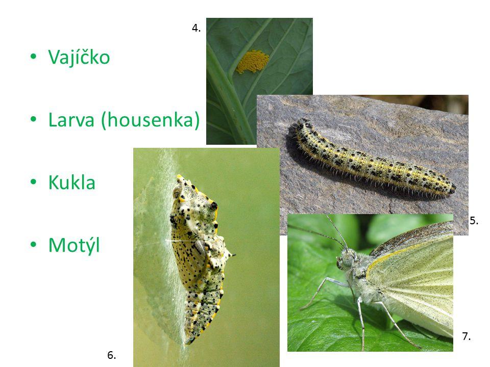 Vajíčko Larva (housenka) Kukla Motýl 4. 5. 6. 7.