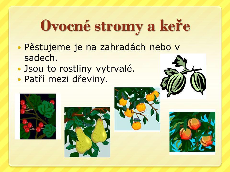 Ovocné stromy a ke ř e Pěstujeme je na zahradách nebo v sadech. Jsou to rostliny vytrvalé. Patří mezi dřeviny.
