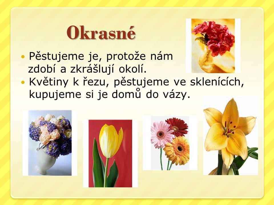 Okrasné Pěstujeme je, protože nám zdobí a zkrášlují okolí. Květiny k řezu, pěstujeme ve sklenících, kupujeme si je domů do vázy.
