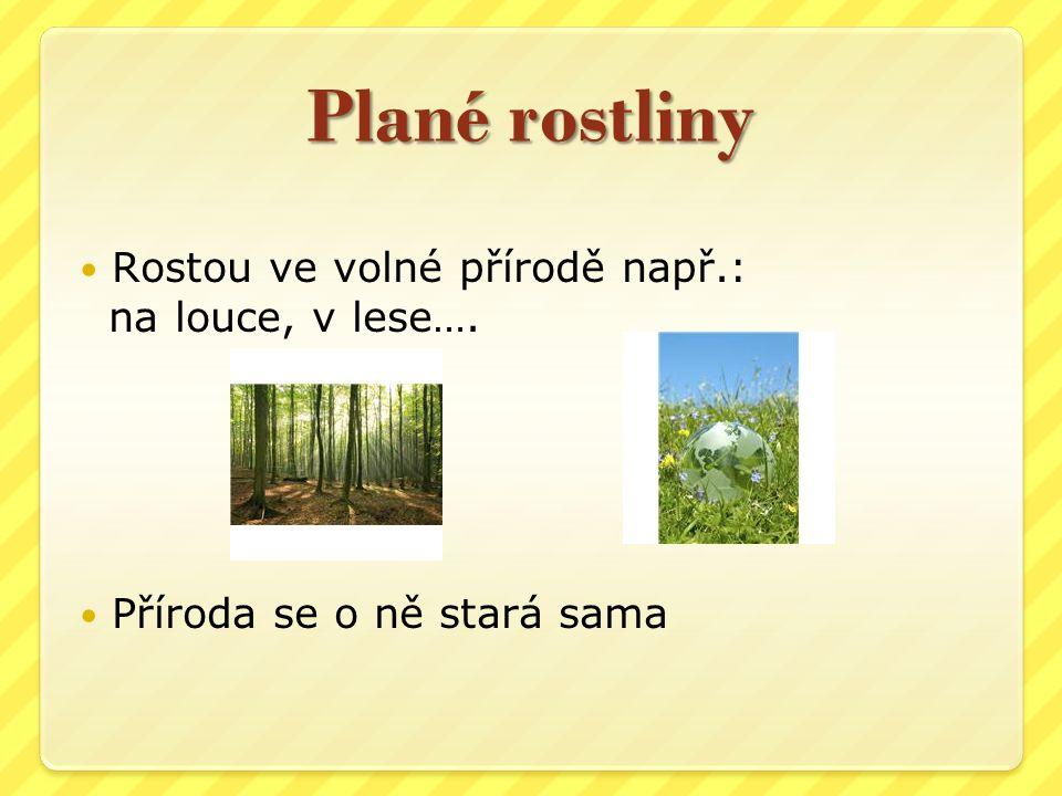Plané rostliny Rostou ve volné přírodě např.: na louce, v lese…. Příroda se o ně stará sama