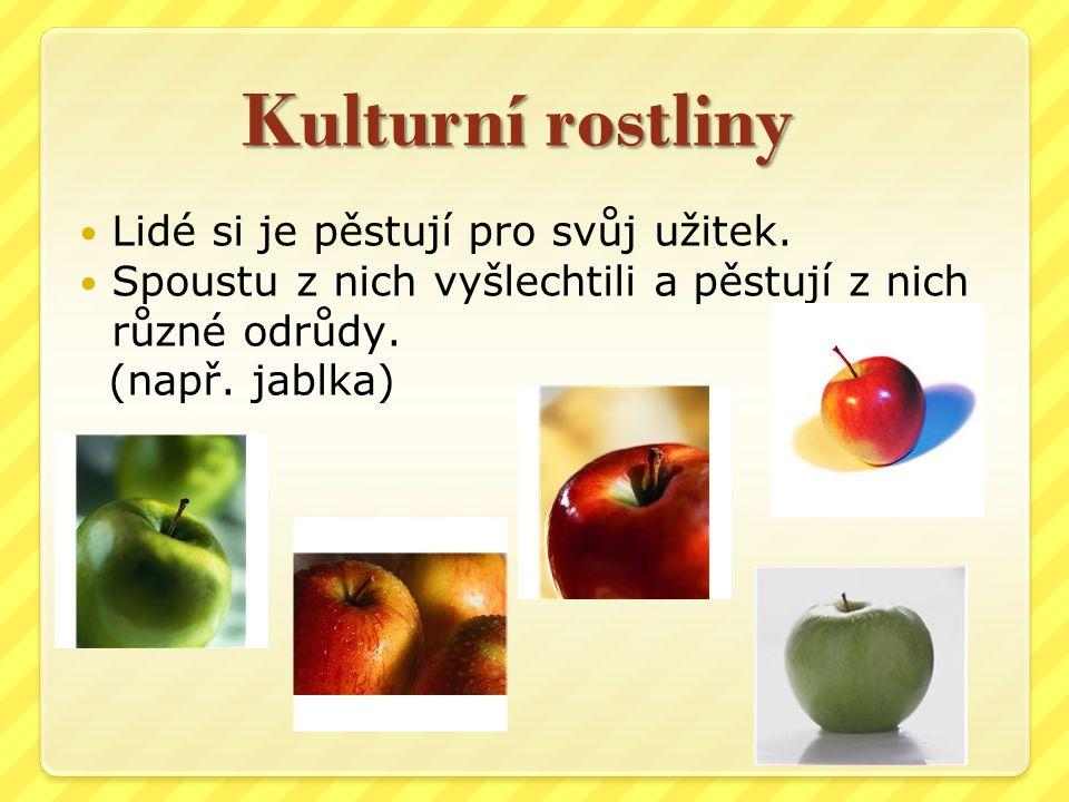 Kulturní rostliny Lidé si je pěstují pro svůj užitek. Spoustu z nich vyšlechtili a pěstují z nich různé odrůdy. (např. jablka)