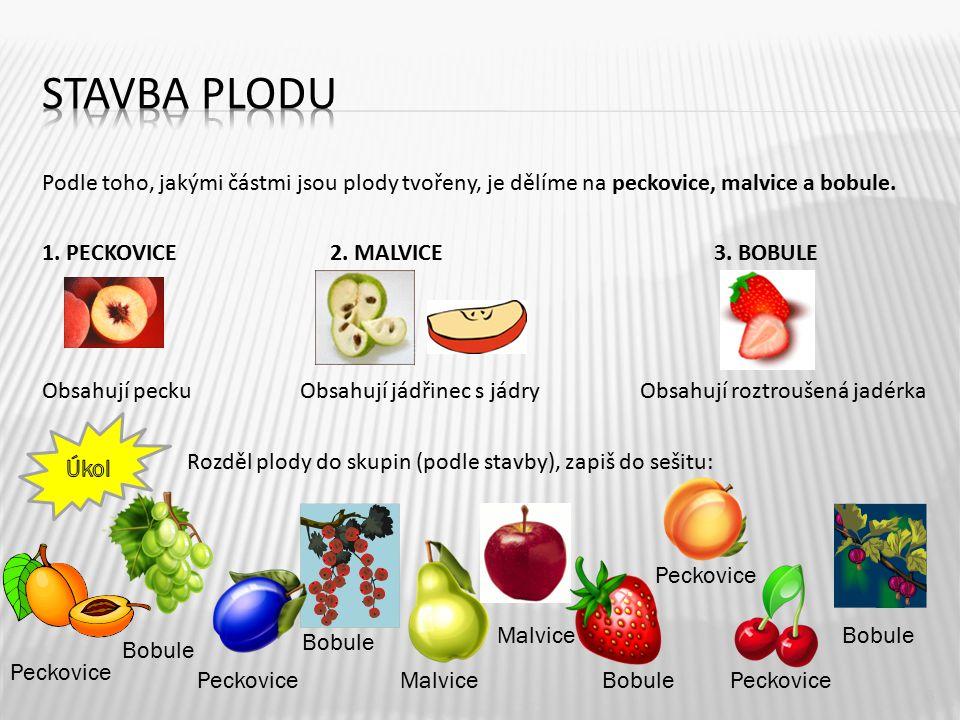 Podle toho, jakými částmi jsou plody tvořeny, je dělíme na peckovice, malvice a bobule. 1. PECKOVICE 2. MALVICE 3. BOBULE Obsahují pecku Obsahují jádř