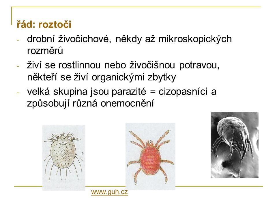 řád: roztoči - drobní živočichové, někdy až mikroskopických rozměrů - živí se rostlinnou nebo živočišnou potravou, někteří se živí organickými zbytky
