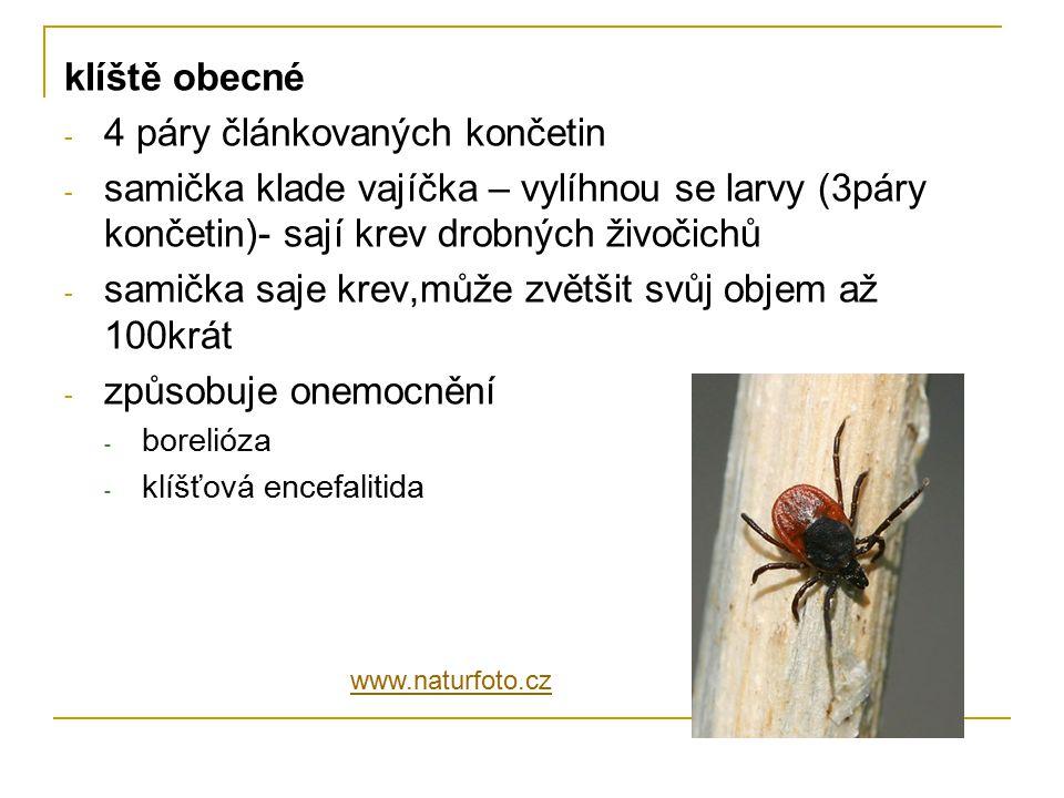 klíště obecné - 4 páry článkovaných končetin - samička klade vajíčka – vylíhnou se larvy (3páry končetin)- sají krev drobných živočichů - samička saje