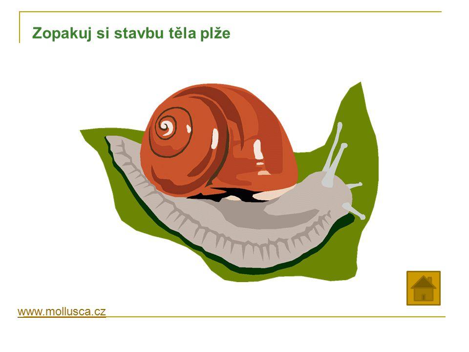 www.mollusca.cz Zopakuj si stavbu těla plže