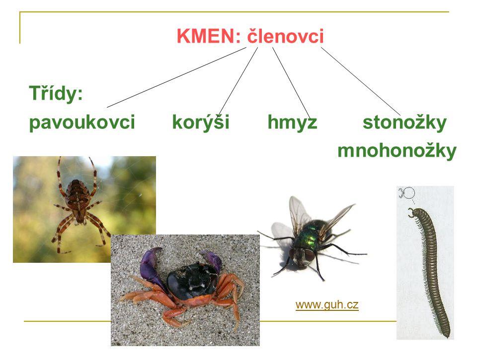 KMEN: členovci Třídy: pavoukovcikorýšihmyzstonožky mnohonožky www.guh.cz