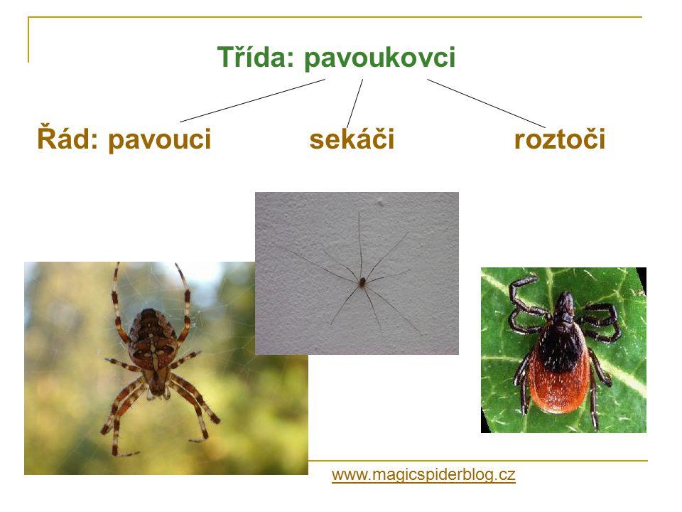 Třída: pavoukovci Řád: pavoucisekáčiroztoči www.magicspiderblog.cz