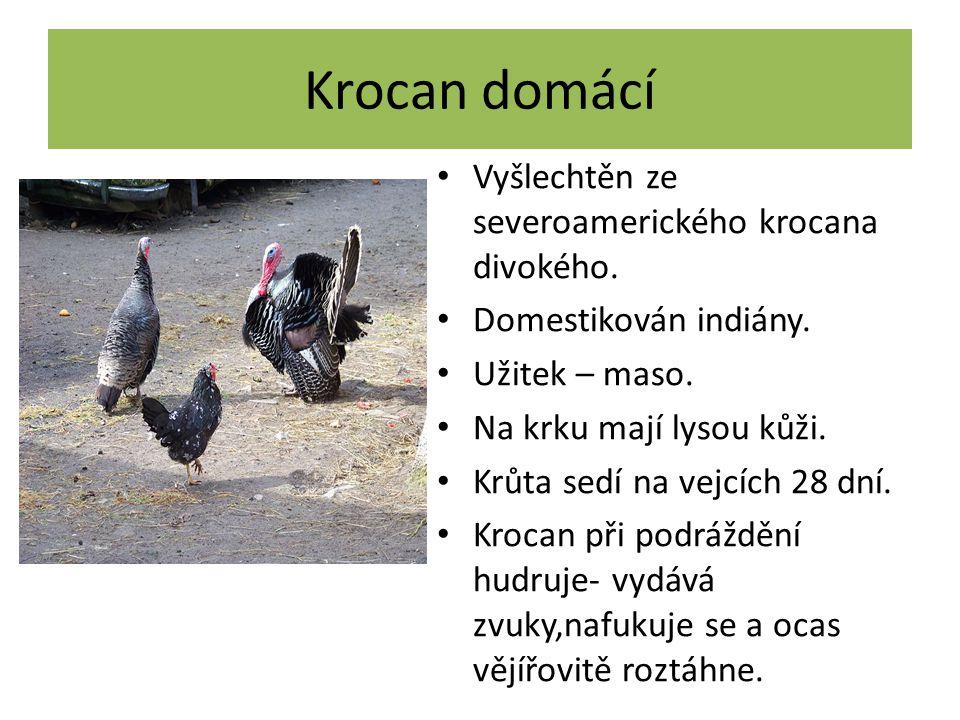 Kur domácí Vyšlechtěn z kura bankivského. Žijí v hejnech. Slepice sedí na vajíčkách 21 dní. Kura domácího chováme pro užitek (maso + vejce). Za rok sn