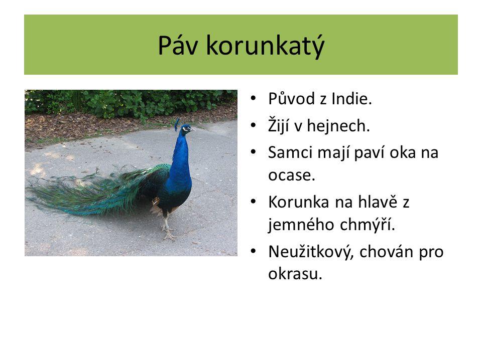 Krocan domácí Vyšlechtěn ze severoamerického krocana divokého.