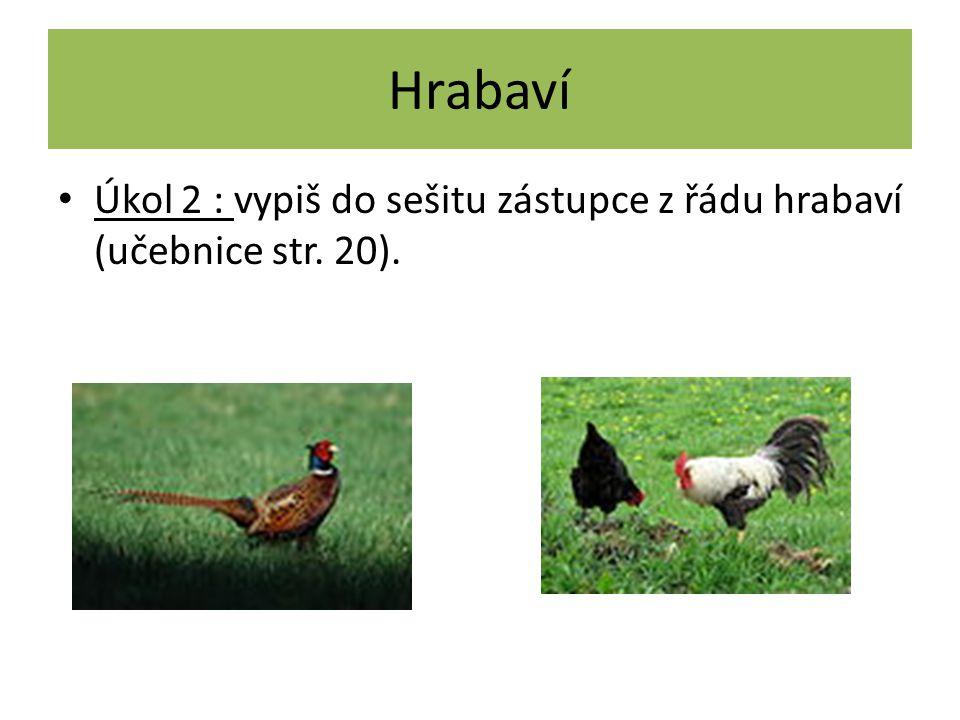Hrabaví Řešení (1): Silné hrabavé nohy. Tupé drápy, samci mají ostruhy. Krátký silný zobák. Všežraví. Špatně létají. Mláďata jsou nekrmivá.
