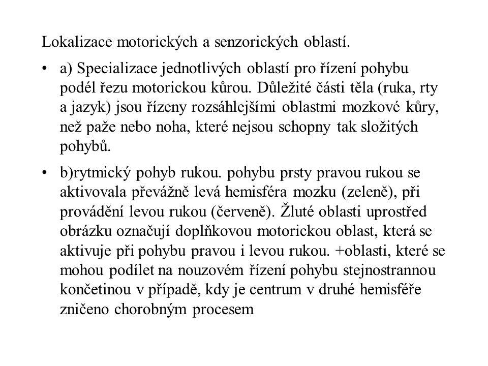 Lokalizace motorických a senzorických oblastí. a) Specializace jednotlivých oblastí pro řízení pohybu podél řezu motorickou kůrou. Důležité části těla