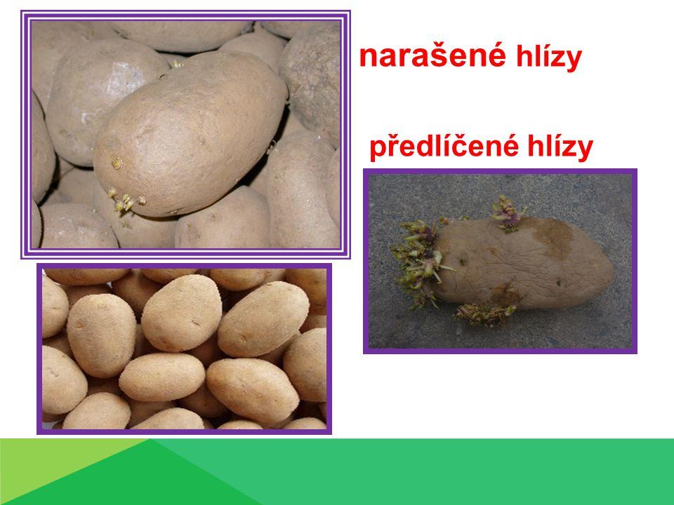 Přihrnování brambor musí být dokončeno do doby tvorby poupat