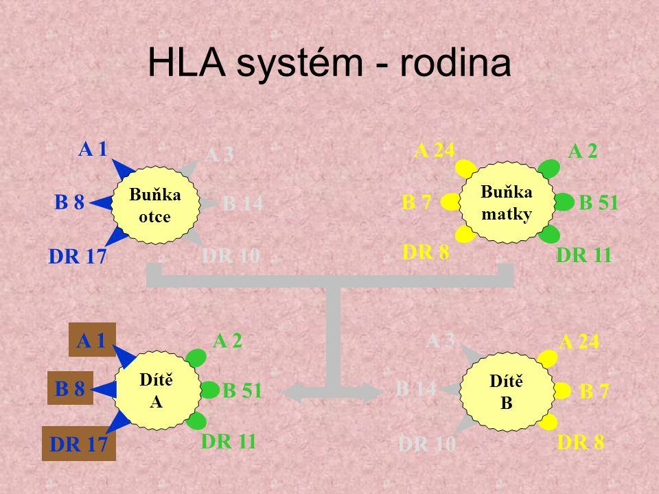 HLA systém - rodina A 2 B 51 DR 11 A 1 B 8 DR 17 Dítě A A 3 B 14 DR 10 A 1 B 8 DR 17 Buňka otce A 24 B 7 DR 8 A 2 B 51 DR 11 Buňka matky A 3 B 14 DR 1