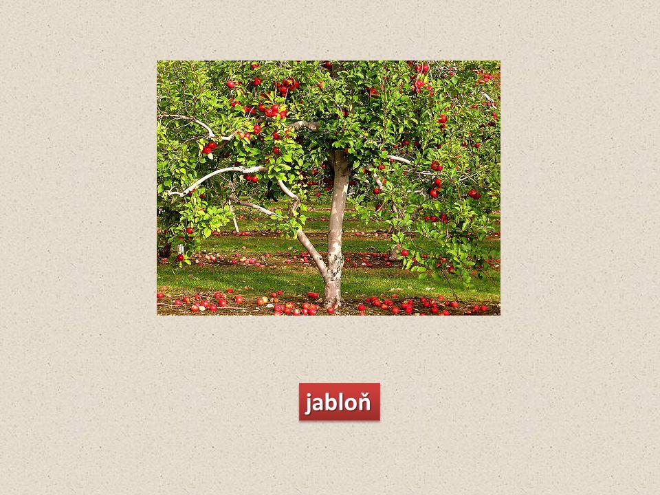 jabloňjabloň