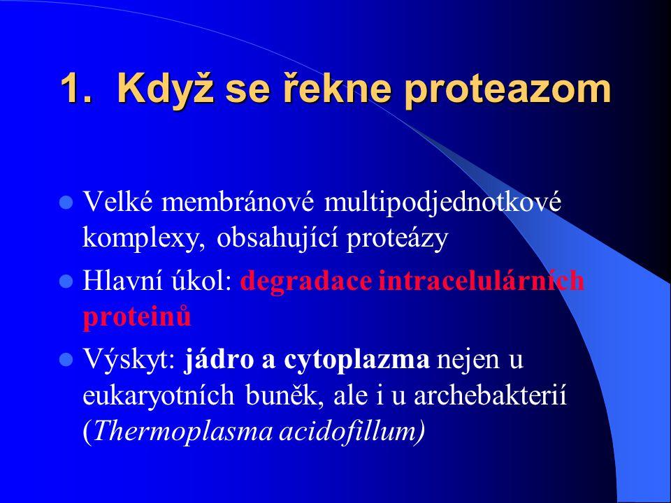 3.2.C Funkce 19S víček Slouží k zachycení a přitáhnutí označeného proteinu do proteazomu Hydrolýza ATP je spojena se vstupem označeného proteinu do proteolytického centra, přesný mechanizmus však není znám 19S struktura se nevyskytuje u archebakterií, typický pouze pro eukaryota