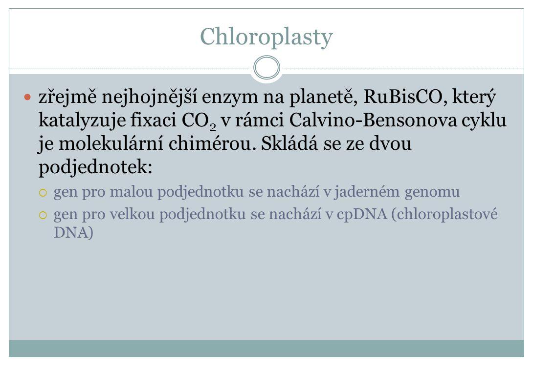 Chloroplasty zřejmě nejhojnější enzym na planetě, RuBisCO, který katalyzuje fixaci CO 2 v rámci Calvino-Bensonova cyklu je molekulární chimérou. Sklád