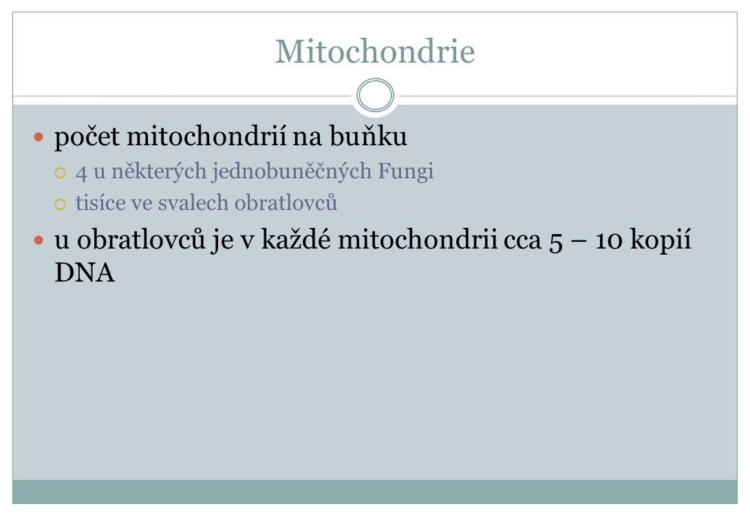 Mitochondrie počet mitochondrií na buňku  4 u některých jednobuněčných Fungi  tisíce ve svalech obratlovců u obratlovců je v každé mitochondrii cca