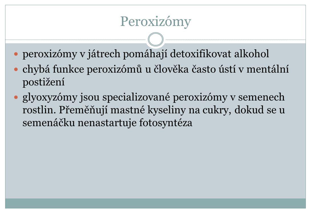 Peroxizómy peroxizómy v játrech pomáhají detoxifikovat alkohol chybá funkce peroxizómů u člověka často ústí v mentální postižení glyoxyzómy jsou speci