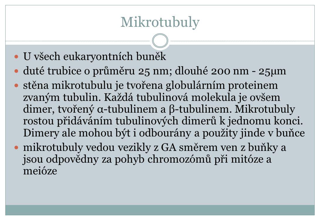 Mikrotubuly U všech eukaryontních buněk duté trubice o průměru 25 nm; dlouhé 200 nm - 25μm stěna mikrotubulu je tvořena globulárním proteinem zvaným t