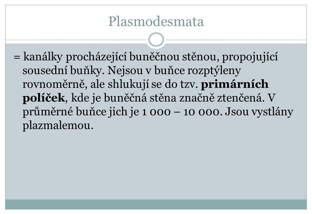 Plasmodesmata = kanálky procházející buněčnou stěnou, propojující sousední buňky. Nejsou v buňce rozptýleny rovnoměrně, ale shlukují se do tzv. primár