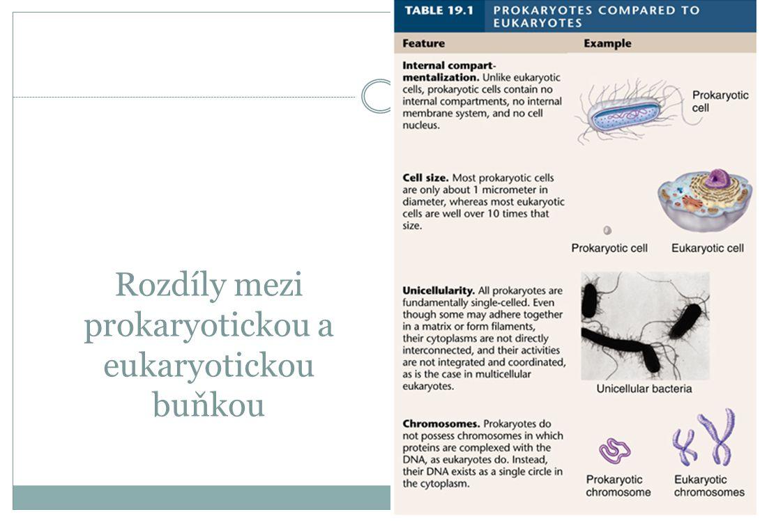 Rozdíly mezi prokaryotickou a eukaryotickou buňkou