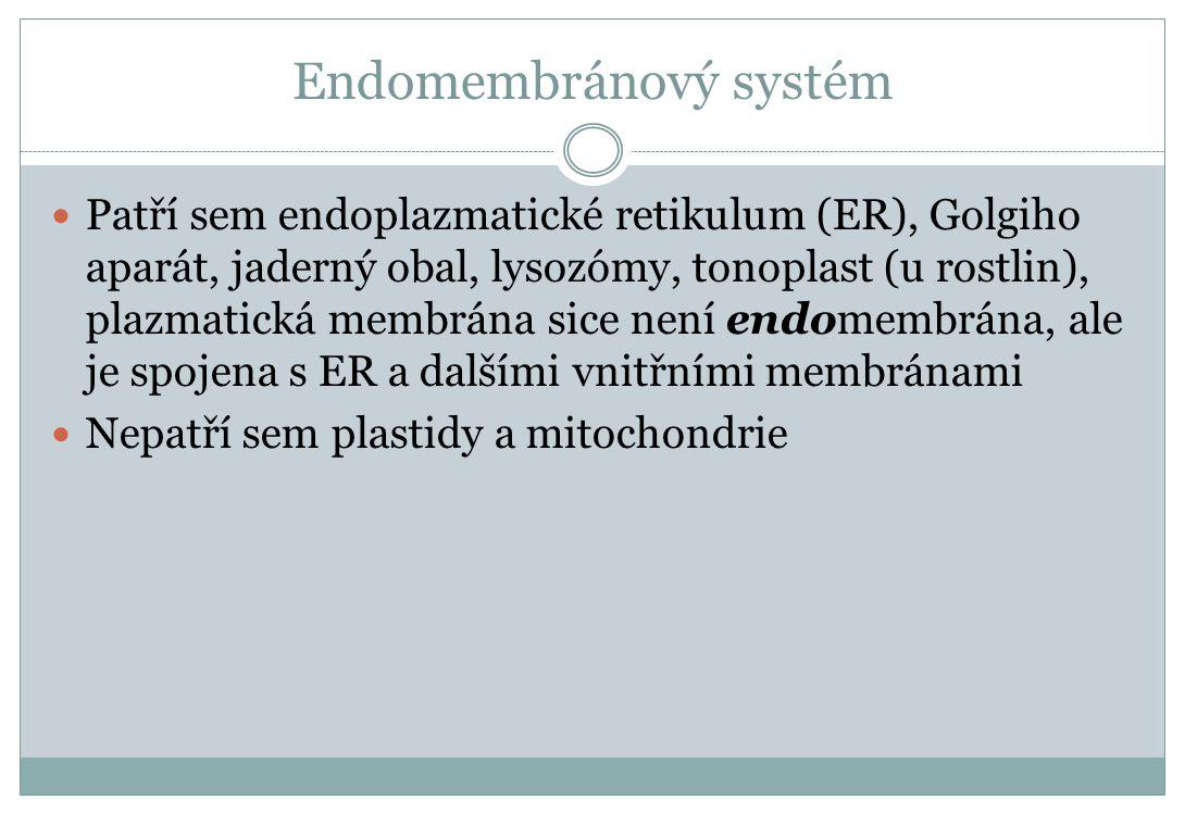 Endomembránový systém Patří sem endoplazmatické retikulum (ER), Golgiho aparát, jaderný obal, lysozómy, tonoplast (u rostlin), plazmatická membrána si