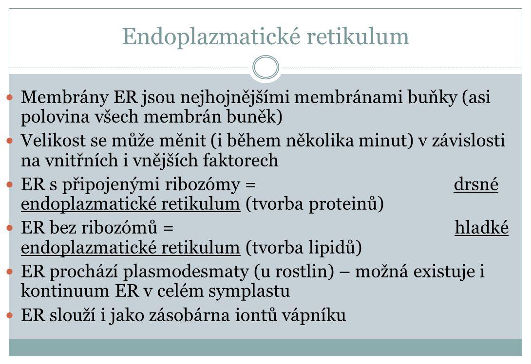 Endoplazmatické retikulum Membrány ER jsou nejhojnějšími membránami buňky (asi polovina všech membrán buněk) Velikost se může měnit (i během několika