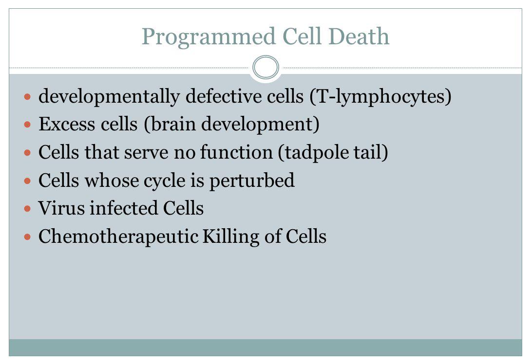 Programmed Cell Death developmentally defective cells (T-lymphocytes) Excess cells (brain development) Cells that serve no function (tadpole tail) Cel
