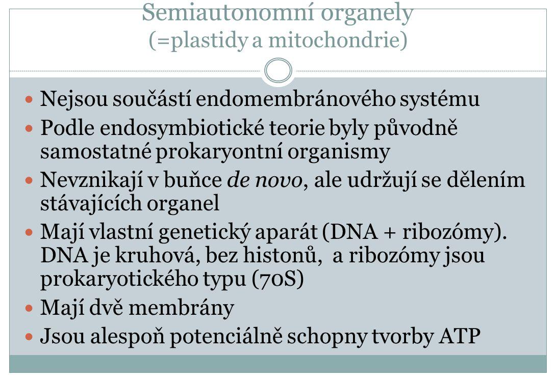 Semiautonomní organely (=plastidy a mitochondrie) Nejsou součástí endomembránového systému Podle endosymbiotické teorie byly původně samostatné prokar
