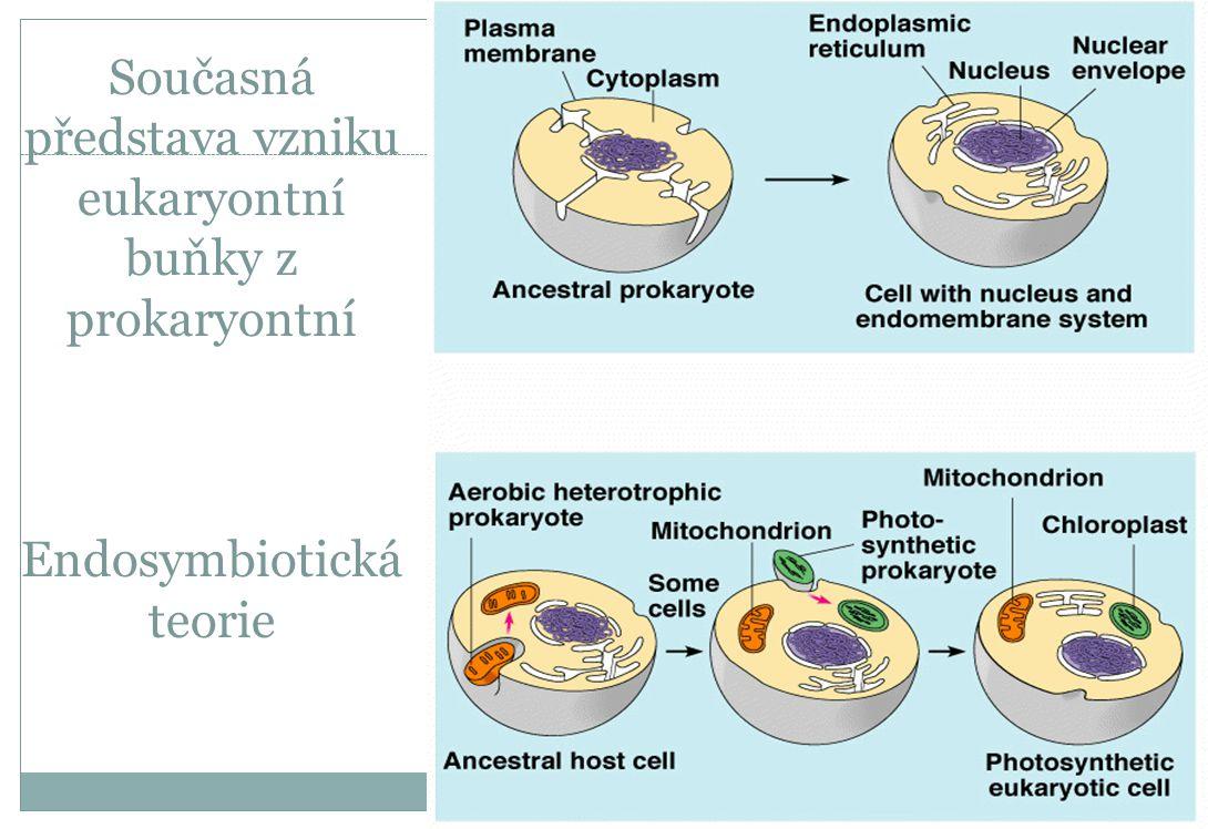 Současná představa vzniku eukaryontní buňky z prokaryontní Endosymbiotická teorie