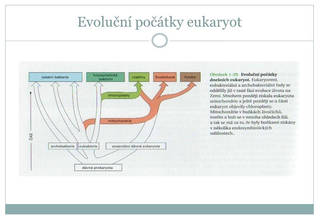 Evoluční počátky eukaryot