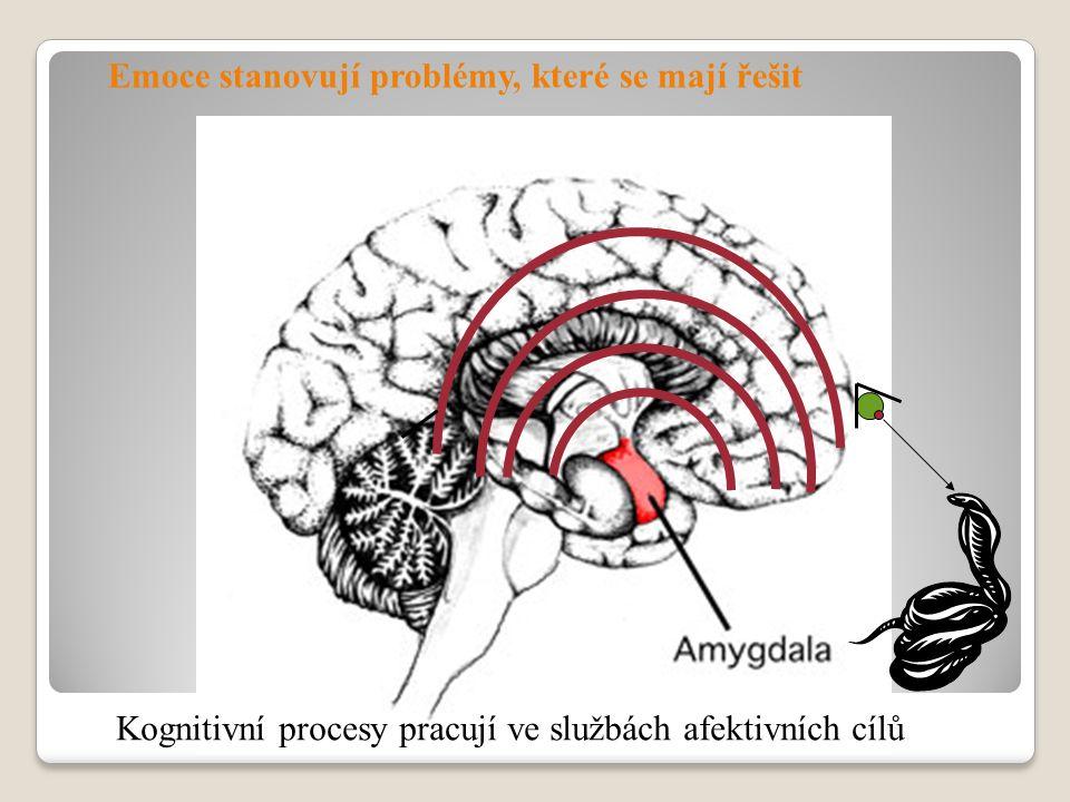 Emoce stanovují problémy, které se mají řešit Kognitivní procesy pracují ve službách afektivních cílů