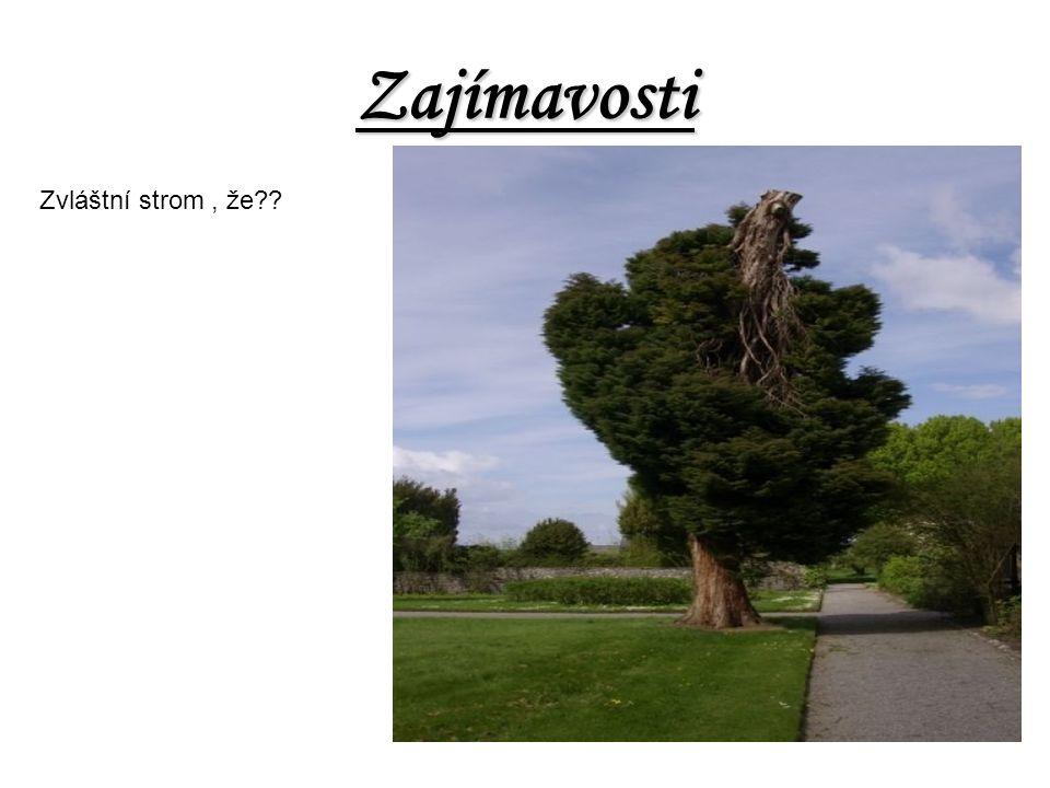 Zajímavosti Zvláštní strom, že??